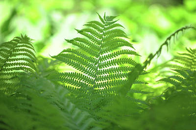 Photograph - Fern Leaves. Green World by Jenny Rainbow