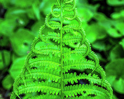 Photograph - Fern Of Fancy by Bill Pevlor