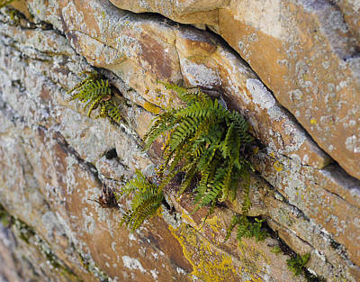 Photograph - Fern On Cliff - Gibraltar Rock - Wisconsin by Steven Ralser