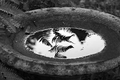 Photograph - Fern Reflections by Ellen Barron O'Reilly