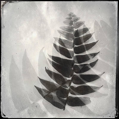 Photograph - Fern Shadow by Dorian Hill