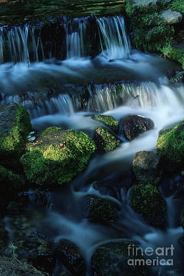 Photograph - Fern Spring by Stan and Anne Foster