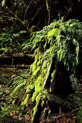 Photograph - Fern Stump by Jerry Sodorff