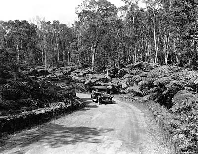 Fern Trees On Mauna Loa Art Print by Underwood Archives