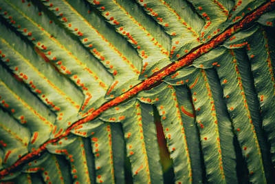 Photograph - Fern Up Close by Bonnie Bruno