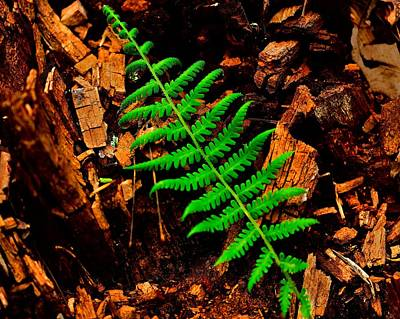 Photograph - Fern by Walt Sterneman