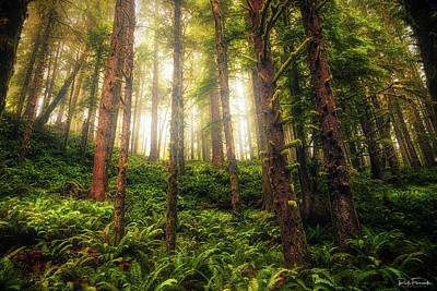 Photograph - Ferngully by Rick Furmanek