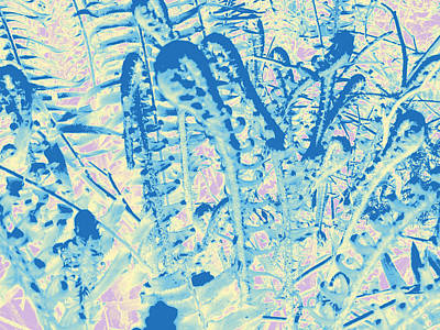 Photograph - Ferns #1 by Anne Westlund