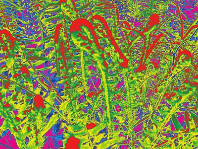 Photograph - Ferns #4 by Anne Westlund