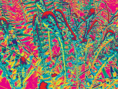 Photograph - Ferns #5 by Anne Westlund