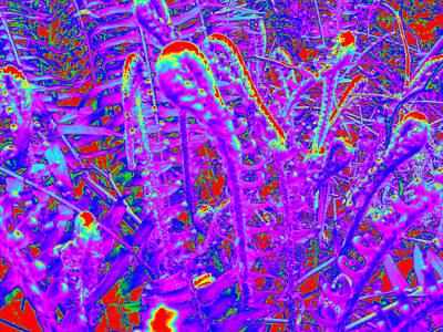 Photograph - Ferns #7 by Anne Westlund