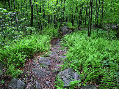 Photograph - Ferns Near Wind Gap by Raymond Salani III