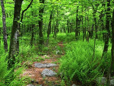 Photograph - Ferns Above Lehigh Gap by Raymond Salani III