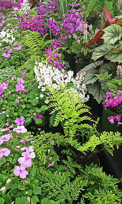Photograph - Ferns And Flowers by Nareeta Martin