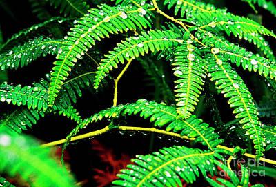 Ferns And Raindrops Art Print by Thomas R Fletcher