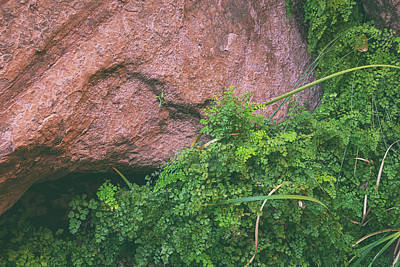 Photograph - Ferns And Rocks by Kunal Mehra