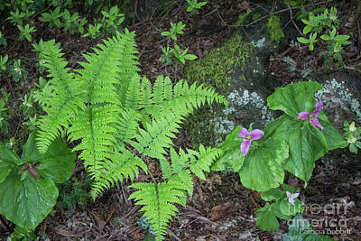 Photograph - Ferns And Trillium by Patricia Babbitt