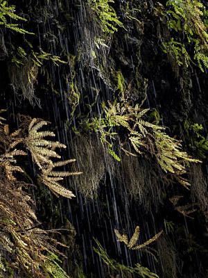 Photograph - Ferns Below Falls By Jean Noren by Jean Noren