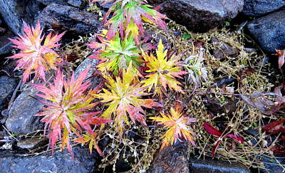 Photograph - Ferns by David Rich