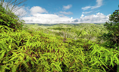 Photograph - Ferns For Days by T Brian Jones