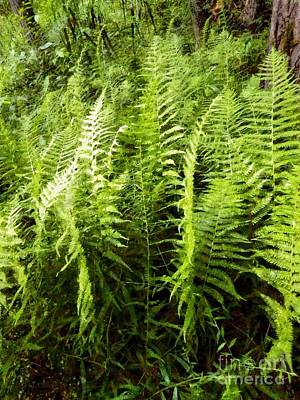 Ferns - Foresta Verde - The Forest Floor Art Print by Janine Riley