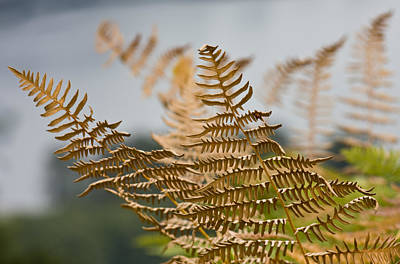 Ferns Growing By The River Print by Barbara  White