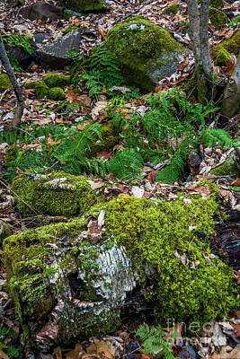 Photograph - Ferns In December  by Alana Ranney