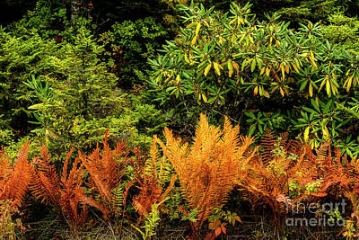 Photograph - Ferns In Fall Color  by Thomas R Fletcher