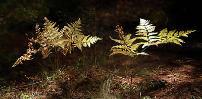 Photograph - Ferns by Jim Vance