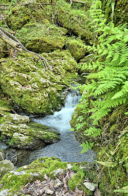 Photograph - Ferns Of Moine Creek by Bonfire Photography