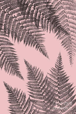 Mixed Media - Ferns On Blush by Emanuela Carratoni