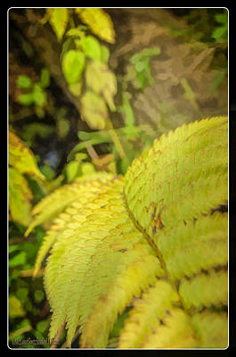 Photograph - Ferns On Miller Pond Boardwalk 2 by LeeAnn McLaneGoetz McLaneGoetzStudioLLCcom
