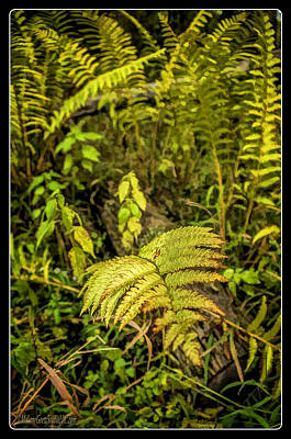 Photograph - Ferns On Miller Pond Boardwalk 3 by LeeAnn McLaneGoetz McLaneGoetzStudioLLCcom