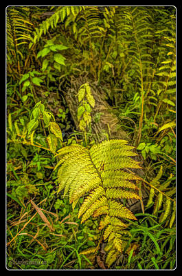 Photograph - Ferns On Miller Pond Boardwalk 4 by LeeAnn McLaneGoetz McLaneGoetzStudioLLCcom