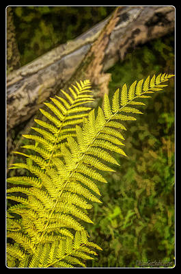 Photograph - Ferns On Miller Pond Boardwalk  by LeeAnn McLaneGoetz McLaneGoetzStudioLLCcom
