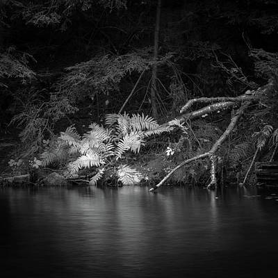 Photograph - Ferns On River by Joshua Hakin