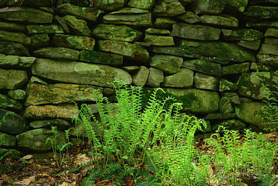 Photograph - Ferns On The Maryland Appalachian Trail by Raymond Salani III