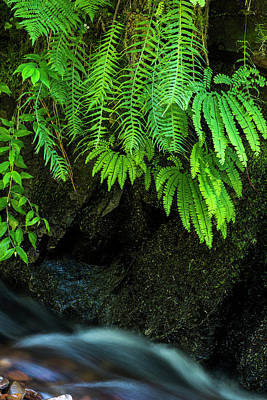 Photograph - Ferns On The Wall by Robert Potts
