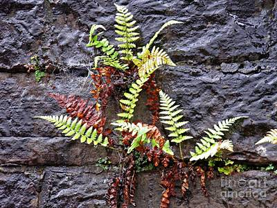 Photograph - Ferns On The Wall by Sarah Loft