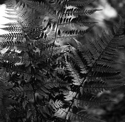 Photograph - Ferns by Sue McGlothlin