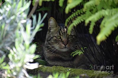 Photograph - Ferny Cat Cave by Rose De Dan