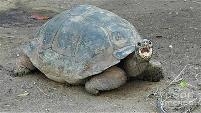 Photograph - Ferocious Turtle by Roberta Byram