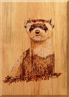 Pyrography - Ferret by Ron Haist