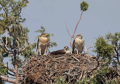 Photograph - Ferruginous Hawk Nest by Loree Johnson