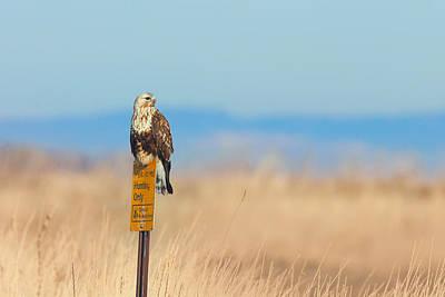 Photograph - Ferruginous Hawk - Tule Lake California by Ram Vasudev