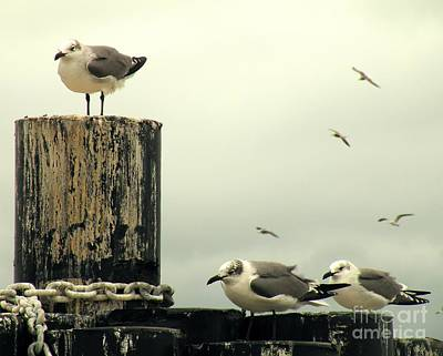 Flying Gull Photograph - Ferry Hypnosis by Joe Jake Pratt