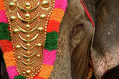 Photograph - Festival Elephant by Peter OReilly