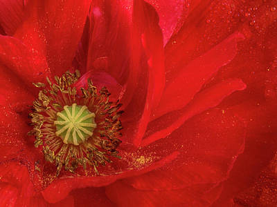 Photograph - Festival Of Redness by Greg Nyquist