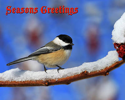 Photograph - Festive Chickadee by Tony Beck