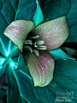 Photograph - Festive by Elfriede Fulda